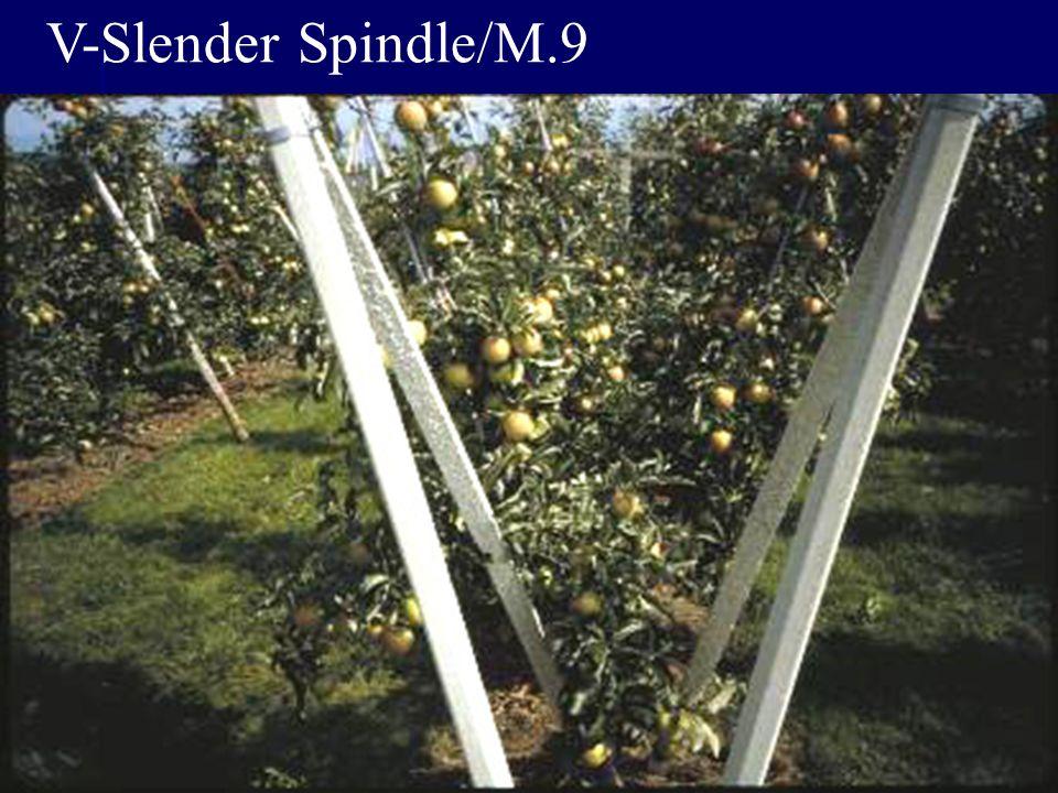 V-Slender Spindle/M.9