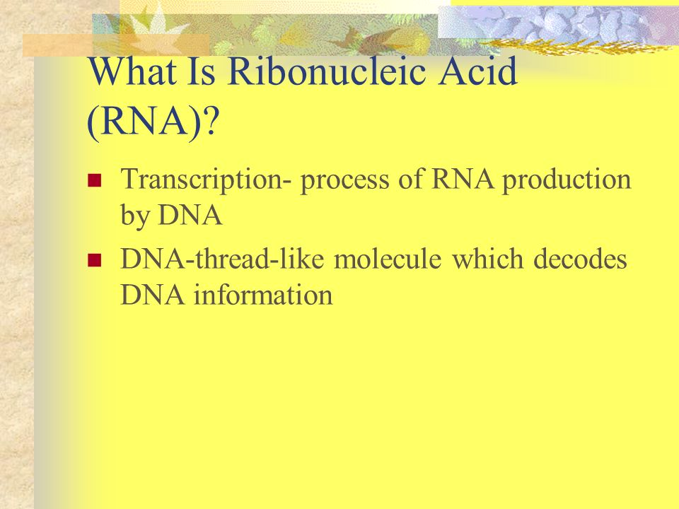 What Is Ribonucleic Acid (RNA)? Transcription- process of RNA production by DNA DNA-thread-like molecule which decodes DNA information