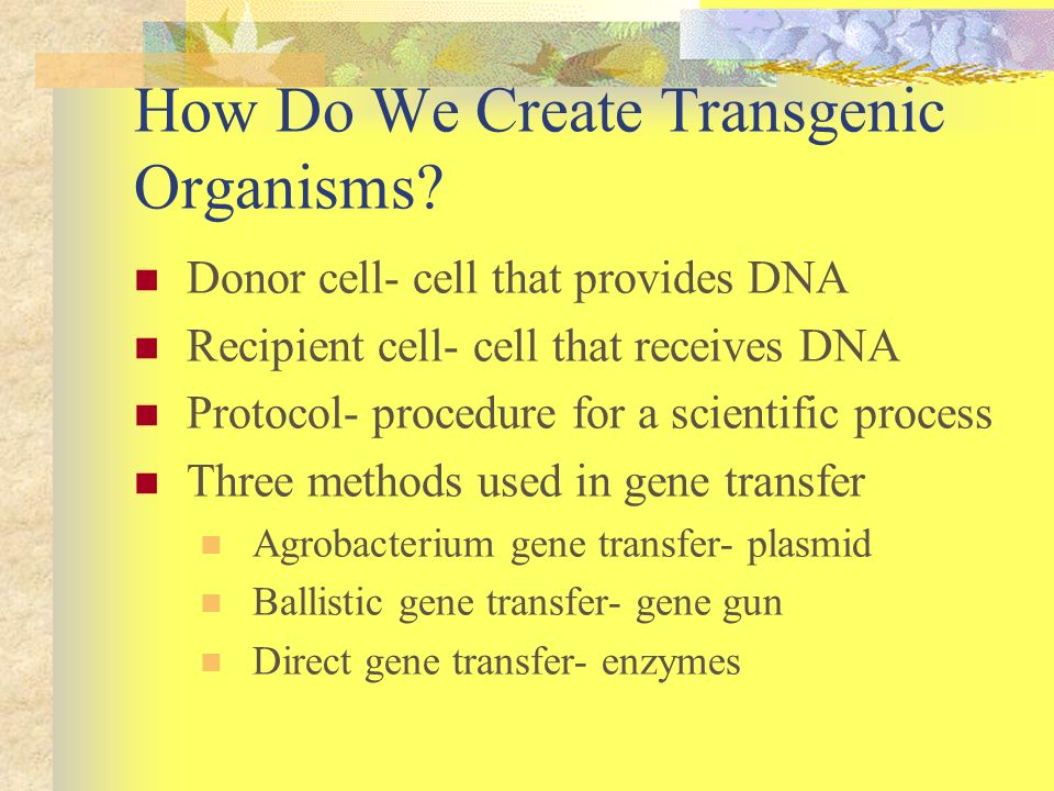 How Do We Create Transgenic Organisms? Donor cell- cell that provides DNA Recipient cell- cell that receives DNA Protocol- procedure for a scientific