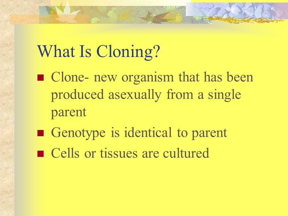 What Is Cloning? Clone- new organism that has been produced asexually from a single parent Genotype is identical to parent Cells or tissues are cultur