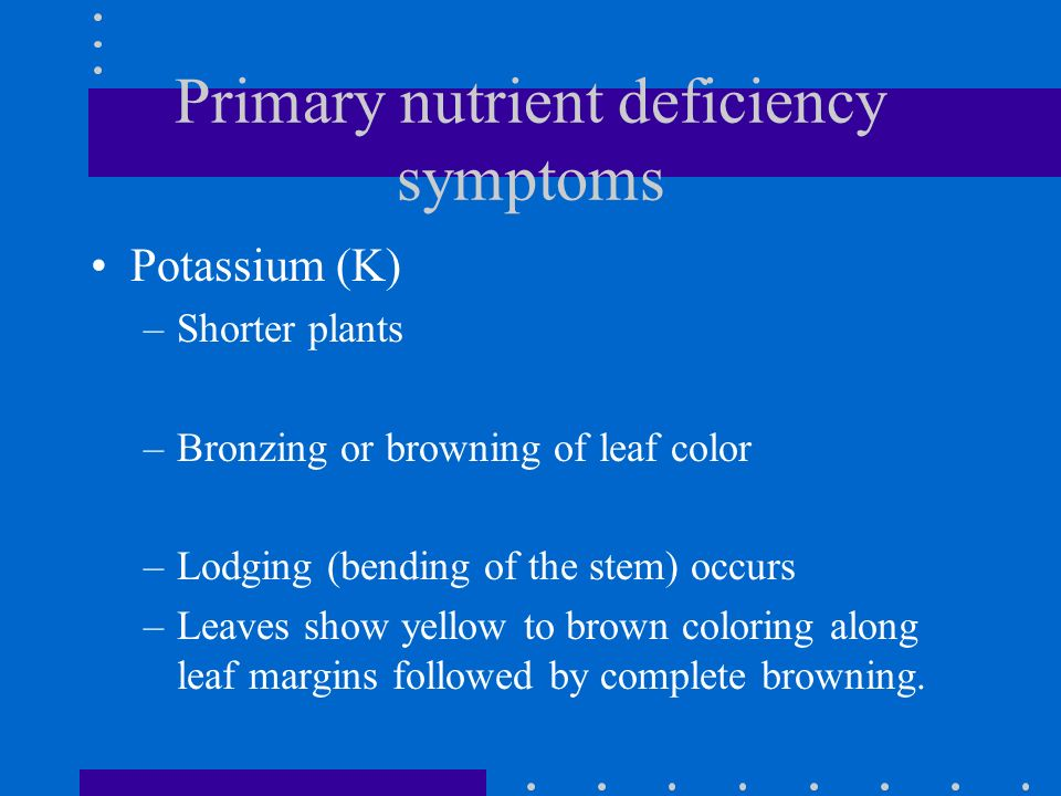 Primary nutrient deficiency symptoms Potassium (K) –Shorter plants –Bronzing or browning of leaf color –Lodging (bending of the stem) occurs –Leaves s