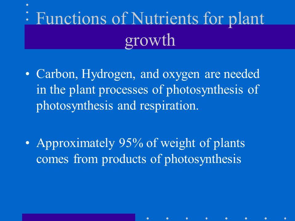 Phosphorus Deficiency