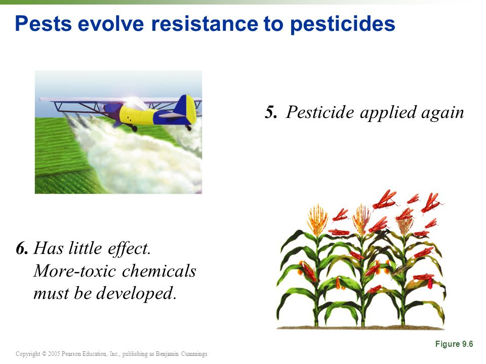 Copyright © 2005 Pearson Education, Inc., publishing as Benjamin Cummings Pests evolve resistance to pesticides 5.Pesticide applied again 6.Has little