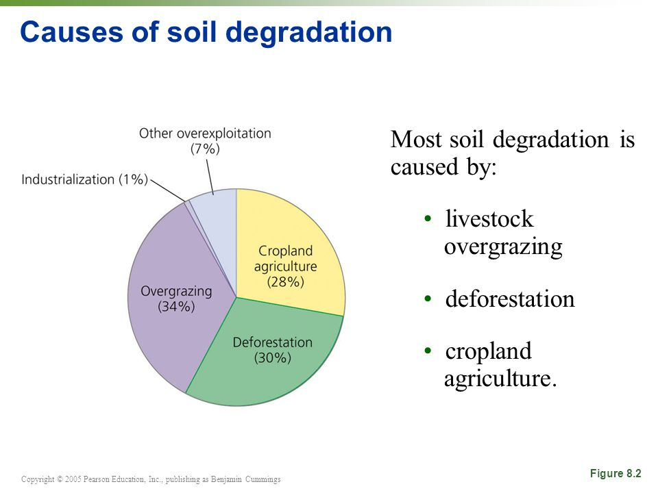 Copyright © 2005 Pearson Education, Inc., publishing as Benjamin Cummings Causes of soil degradation Most soil degradation is caused by: livestock ove