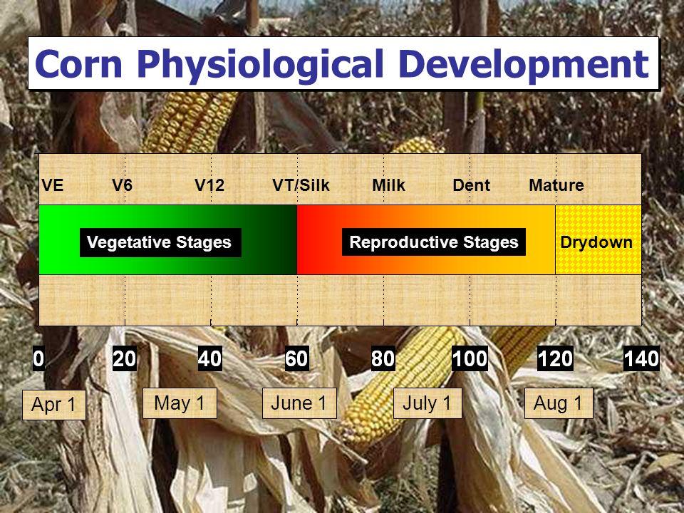 VE V6 V12 VT/Silk Milk Dent Mature Corn Physiological Development Apr 1 May 1June 1Aug 1July 1 Drydown Vegetative Stages Reproductive Stages
