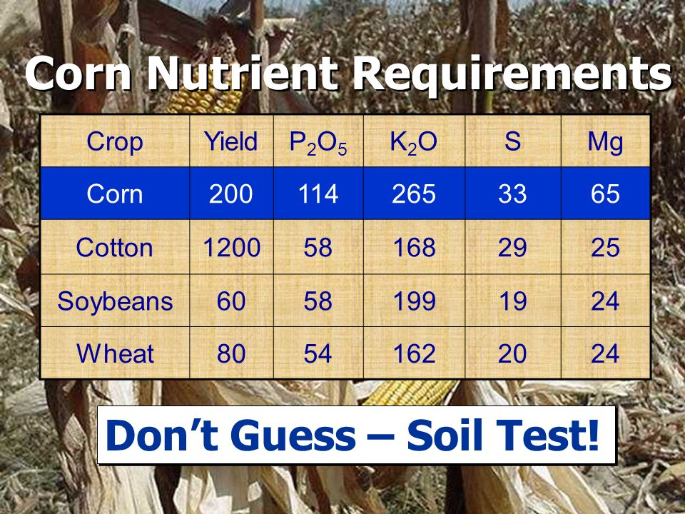 Corn Nutrient Requirements CropYieldP2O5P2O5 K2OK2OSMg Corn2001142653365 Cotton1200581682925 Soybeans60581991924 Wheat80541622024 Dont Guess – Soil Test!