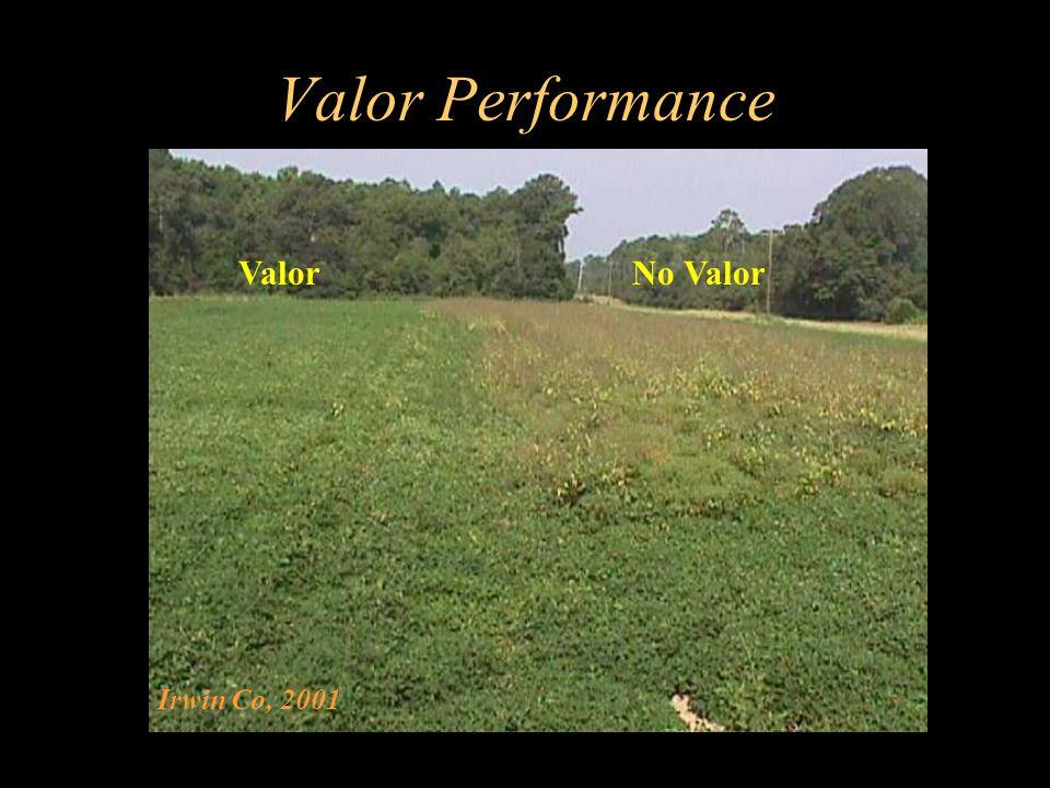 Valor Performance Valor No Valor Irwin Co, 2001