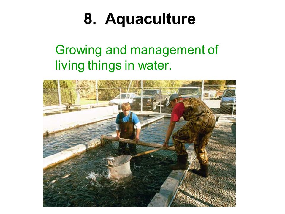 Growing and management of living things in water. 8. Aquaculture