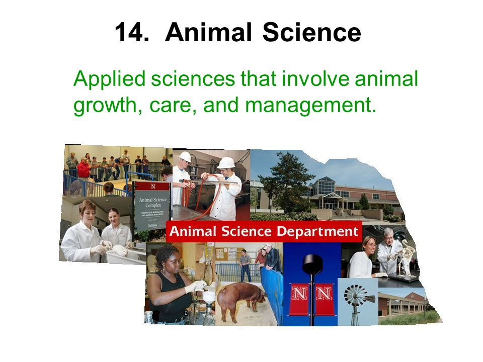 Applied sciences that involve animal growth, care, and management. 14. Animal Science