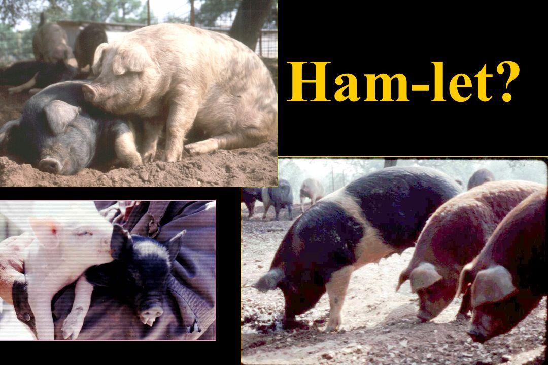 Ham-let?