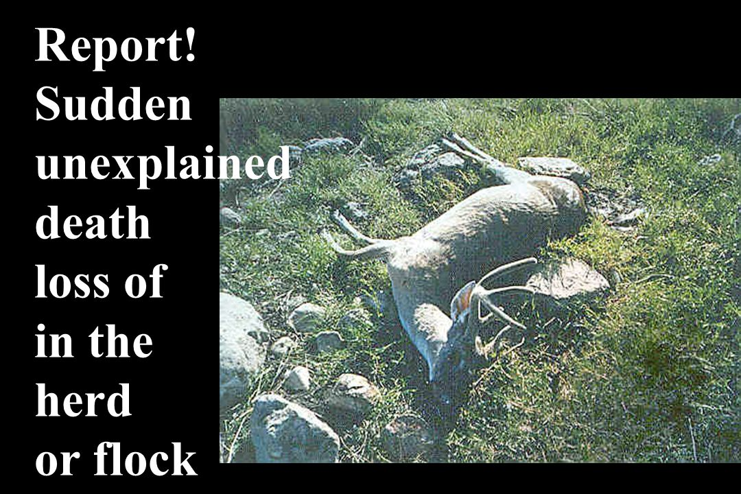 Report! Sudden unexplained death loss of in the herd or flock
