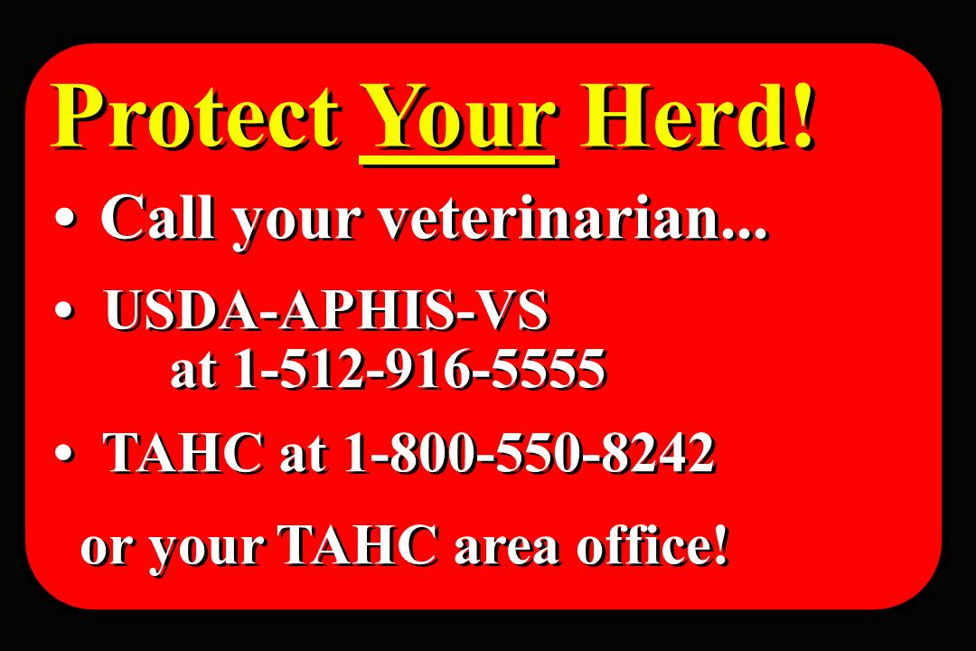 Protect Your Herd! Call your veterinarian... USDA-APHIS-VS at 1-512-916-5555 TAHC at 1-800-550-8242 or your TAHC area office! Call your veterinarian..