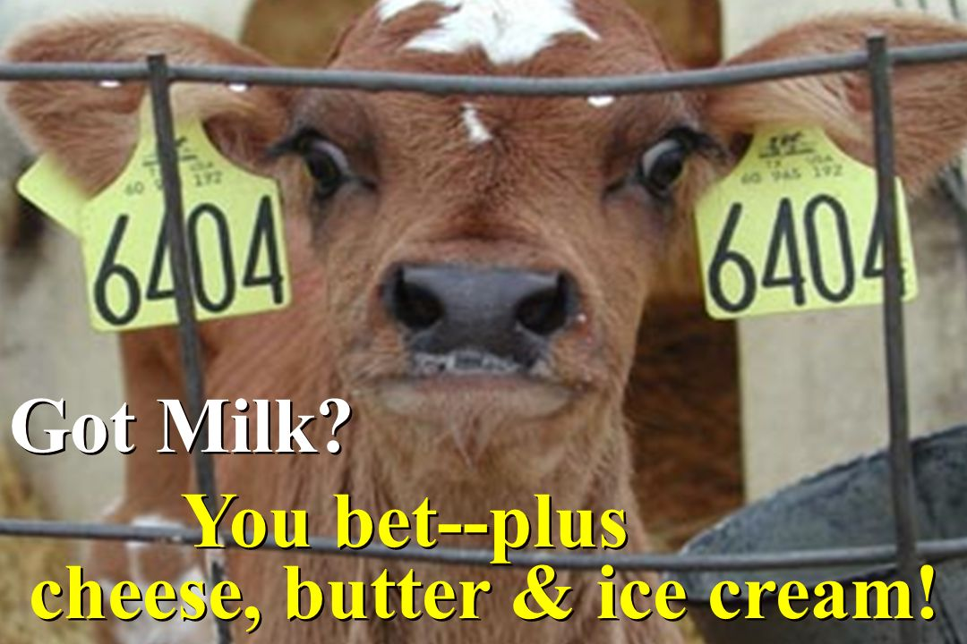 Got Milk? You bet--plus cheese, butter & ice cream! Got Milk? You bet--plus cheese, butter & ice cream!