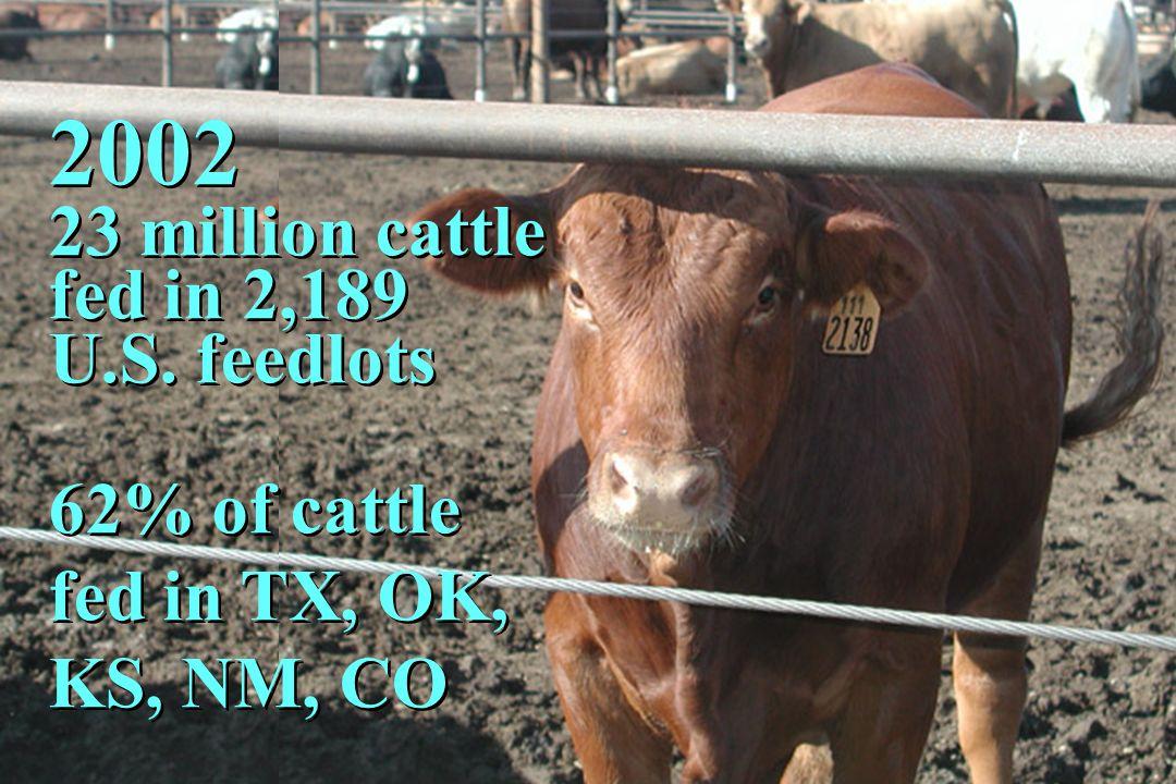 2002 23 million cattle fed in 2,189 U.S. feedlots 62% of cattle fed in TX, OK, KS, NM, CO 2002 23 million cattle fed in 2,189 U.S. feedlots 62% of cat