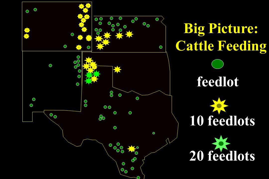 10 feedlots 20 feedlots feedlot Big Picture: Cattle Feeding