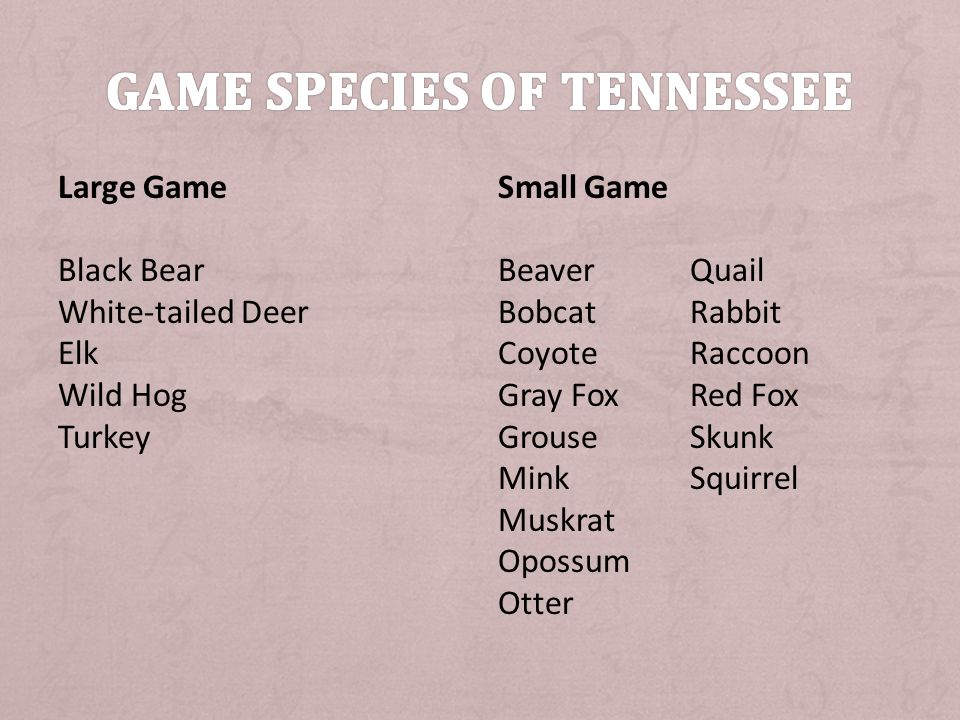 Large Game Black Bear White-tailed Deer Elk Wild Hog Turkey Small Game BeaverQuail BobcatRabbit CoyoteRaccoon Gray FoxRed Fox GrouseSkunk MinkSquirrel Muskrat Opossum Otter