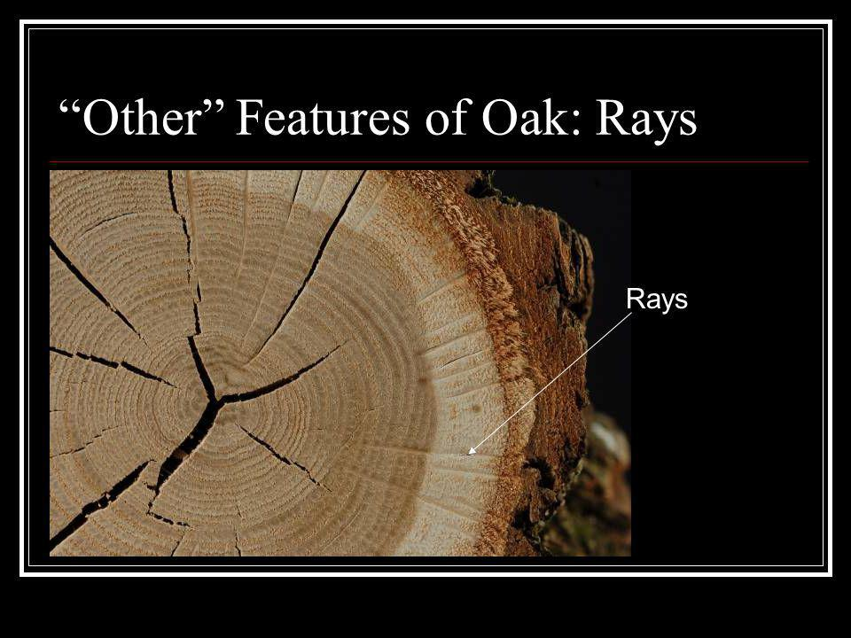 Other Features of Oak: Rays Rays