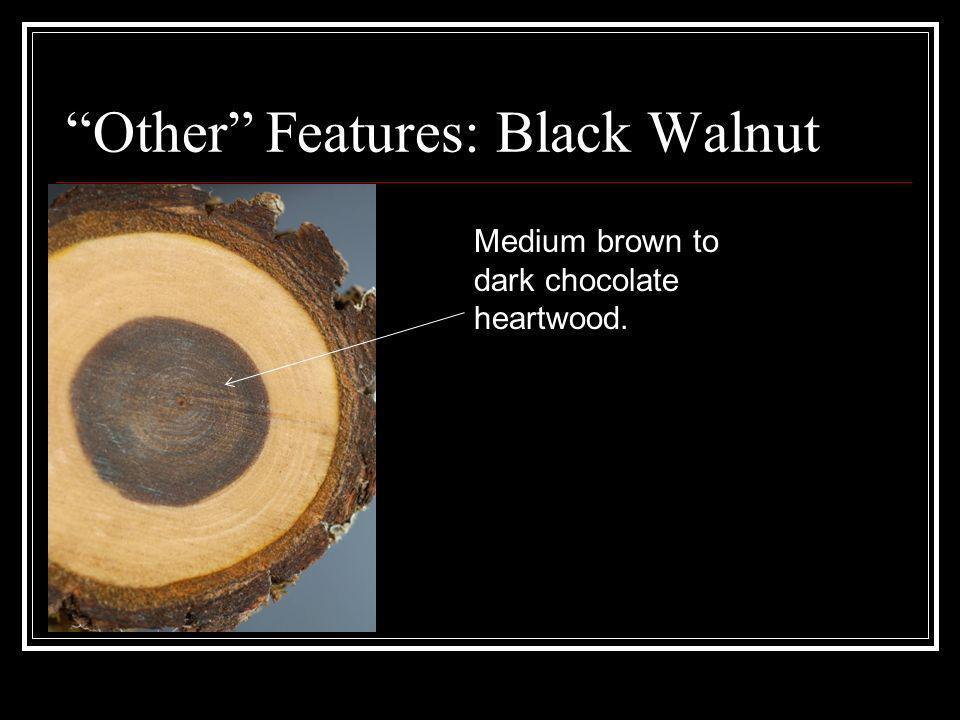 Other Features: Black Walnut Medium brown to dark chocolate heartwood.