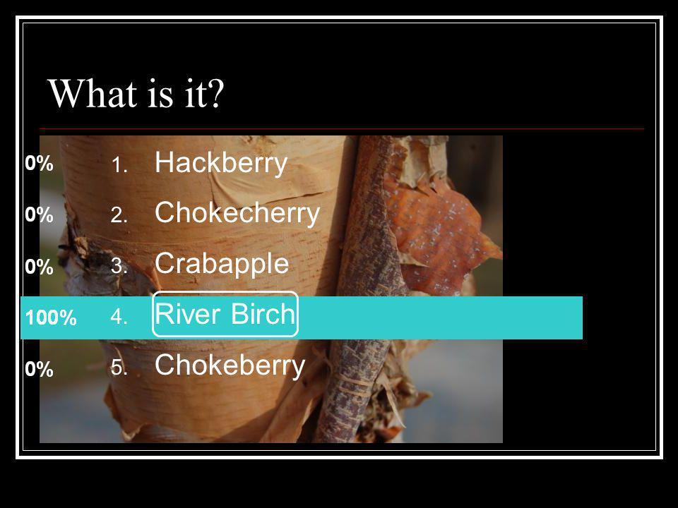 1. Hackberry 2. Chokecherry 3. Crabapple 4. River Birch 5. Chokeberry What is it?