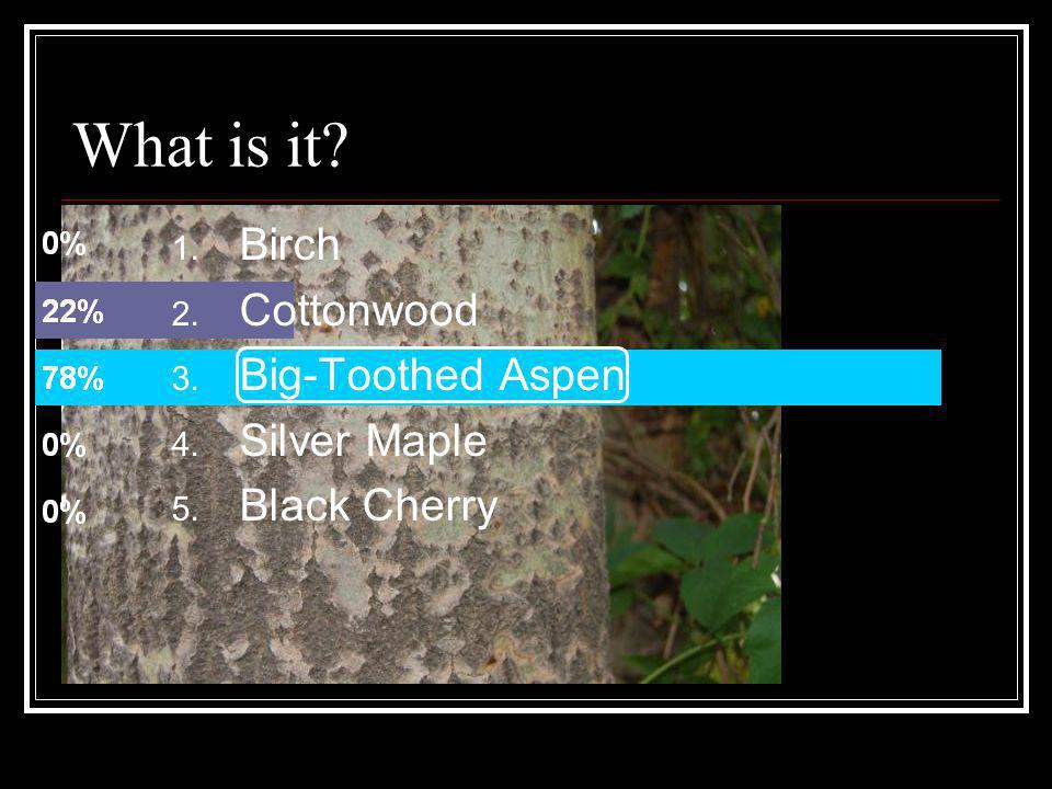 What is it? 1. Birch 2. Cottonwood 3. Big-Toothed Aspen 4. Silver Maple 5. Black Cherry