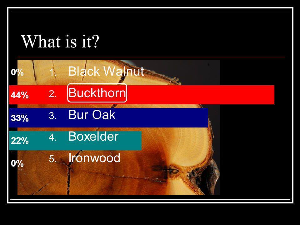 What is it? 1. Black Walnut 2. Buckthorn 3. Bur Oak 4. Boxelder 5. Ironwood