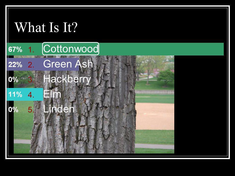 What Is It? 1. Cottonwood 2. Green Ash 3. Hackberry 4. Elm 5. Linden