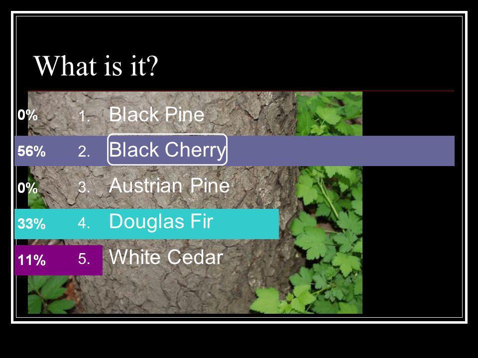 1. Black Pine 2. Black Cherry 3. Austrian Pine 4. Douglas Fir 5. White Cedar What is it?