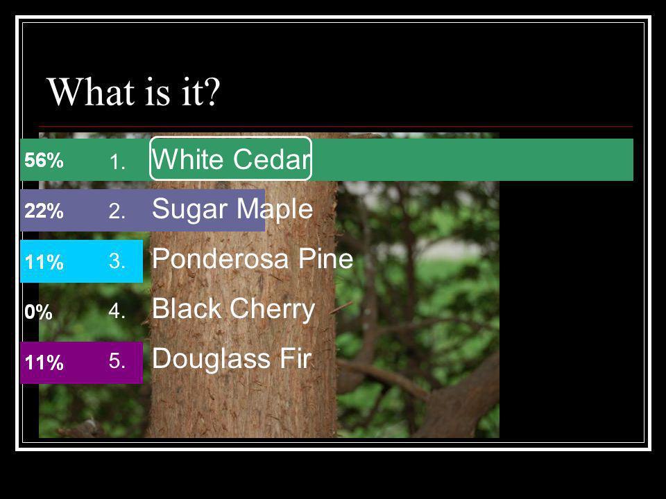1. White Cedar 2. Sugar Maple 3. Ponderosa Pine 4. Black Cherry 5. Douglass Fir What is it?