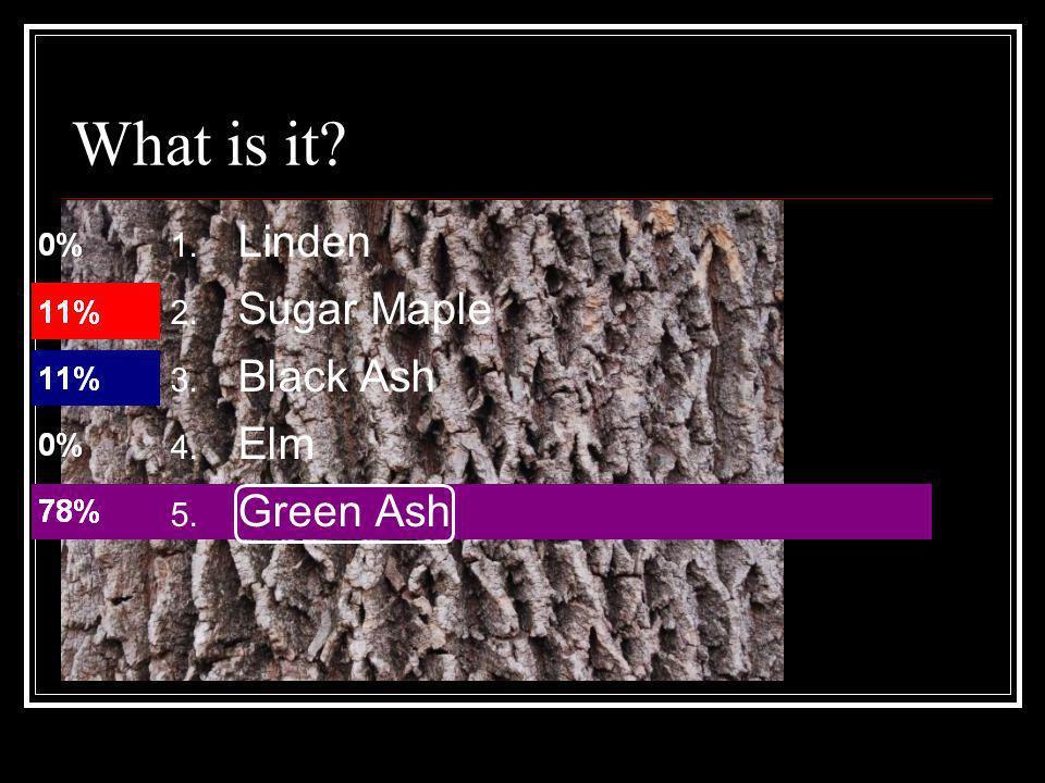 What is it? 1. Linden 2. Sugar Maple 3. Black Ash 4. Elm 5. Green Ash
