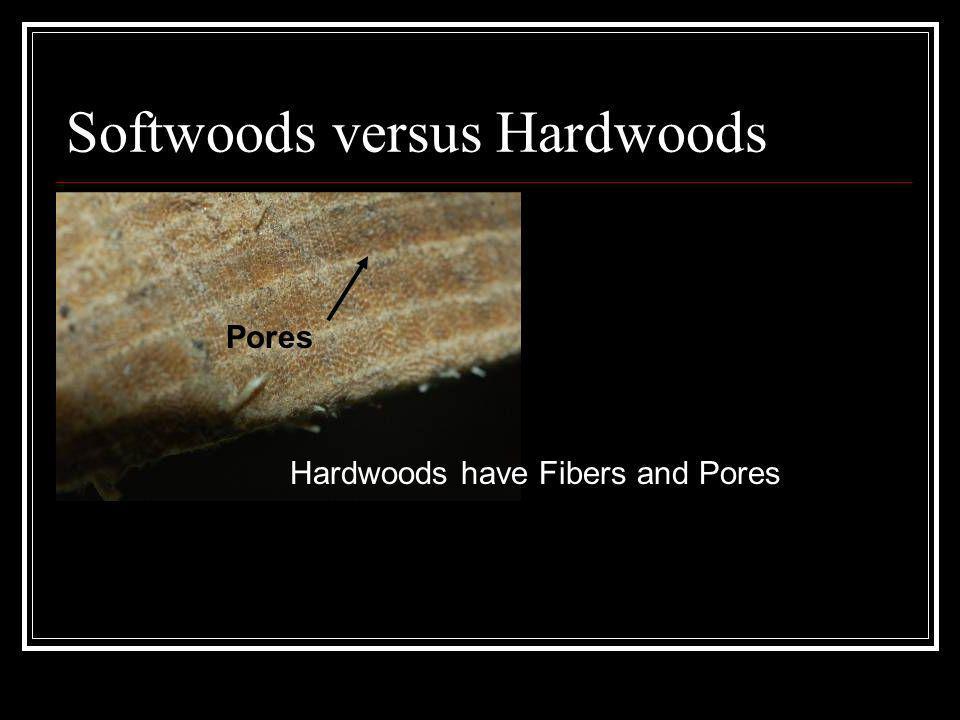 Softwoods versus Hardwoods Hardwoods have Fibers and Pores Pores