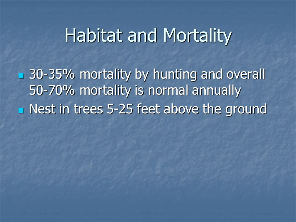 Habitat and Mortality 30-35% mortality by hunting and overall 50-70% mortality is normal annually 30-35% mortality by hunting and overall 50-70% mortality is normal annually Nest in trees 5-25 feet above the ground Nest in trees 5-25 feet above the ground