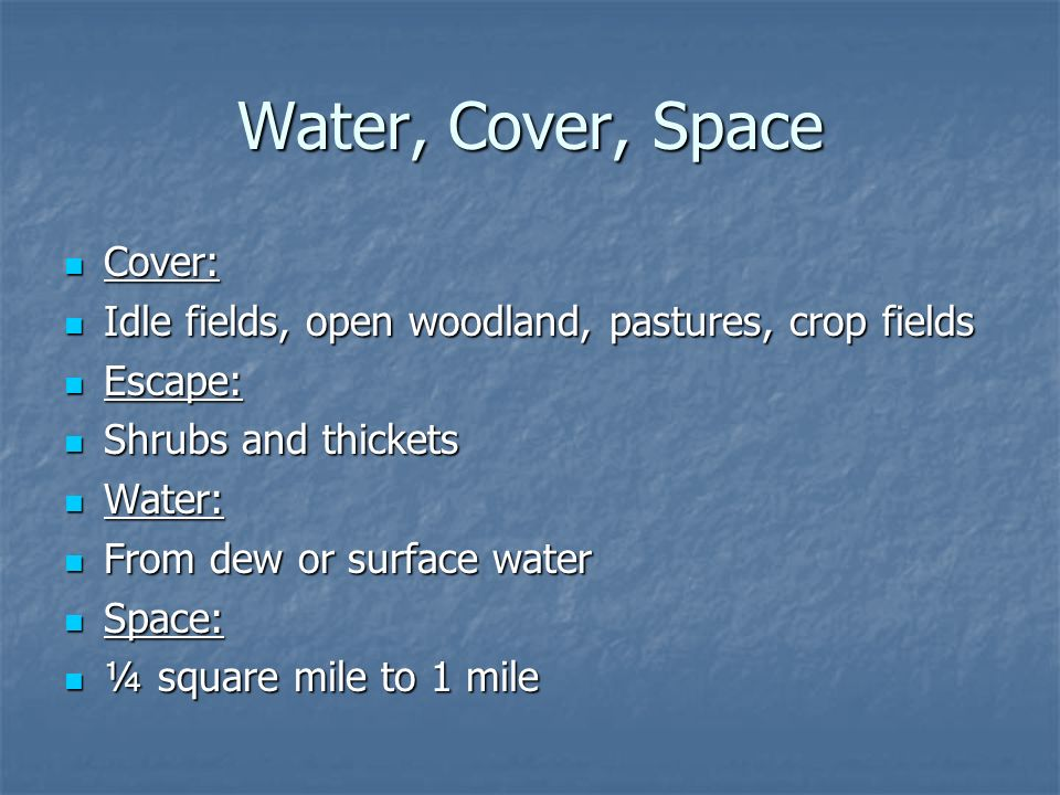 Water, Cover, Space Cover: Cover: Idle fields, open woodland, pastures, crop fields Idle fields, open woodland, pastures, crop fields Escape: Escape: Shrubs and thickets Shrubs and thickets Water: Water: From dew or surface water From dew or surface water Space: Space: ¼ square mile to 1 mile ¼ square mile to 1 mile