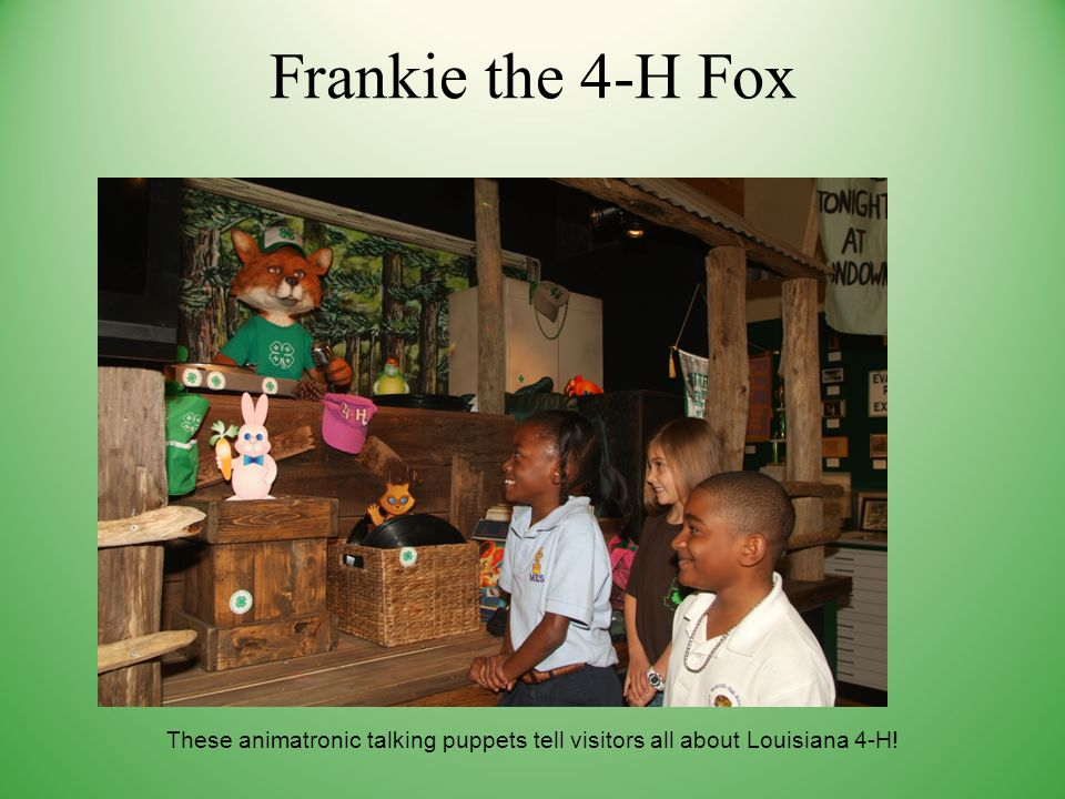 Frankie the 4-H Fox These animatronic talking puppets tell visitors all about Louisiana 4-H!