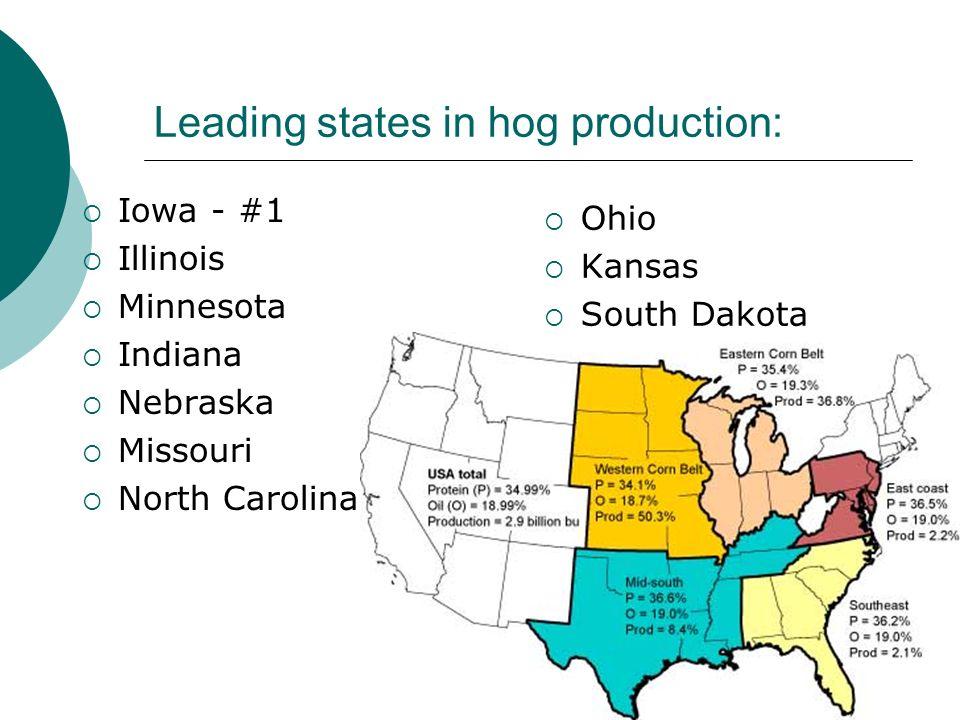 Leading states in hog production: Iowa - #1 Illinois Minnesota Indiana Nebraska Missouri North Carolina Ohio Kansas South Dakota