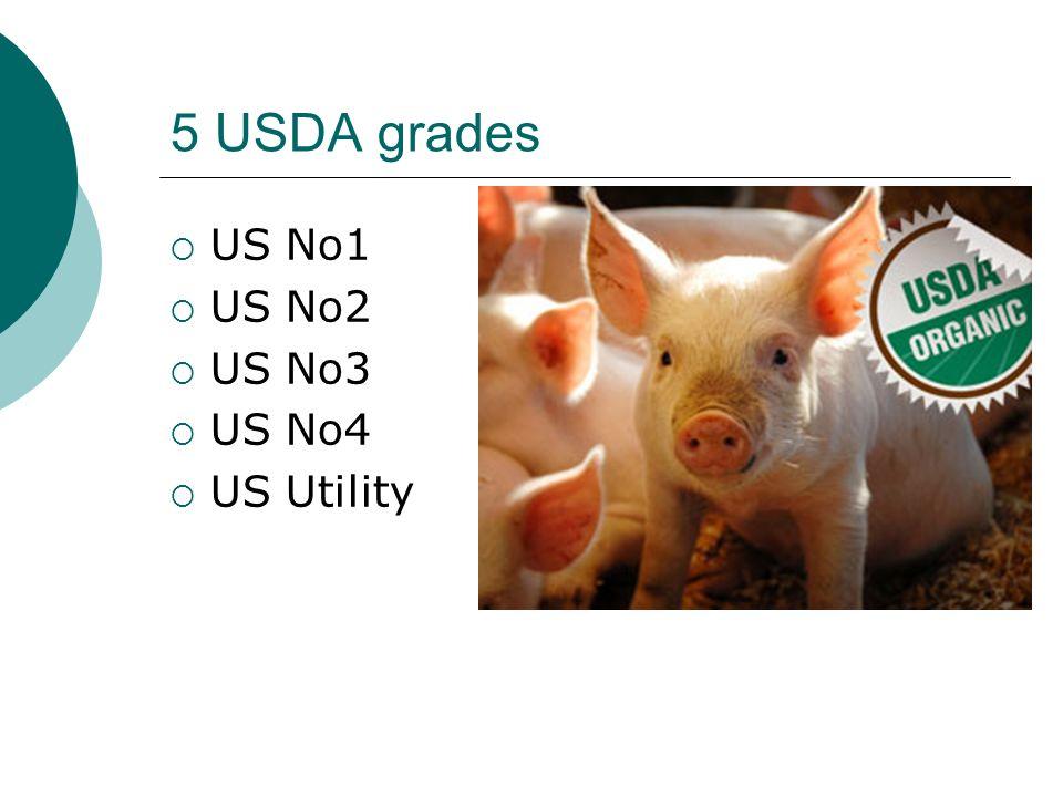 5 USDA grades US No1 US No2 US No3 US No4 US Utility