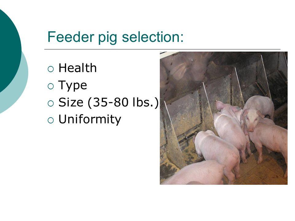 Feeder pig selection: Health Type Size (35-80 lbs.) Uniformity