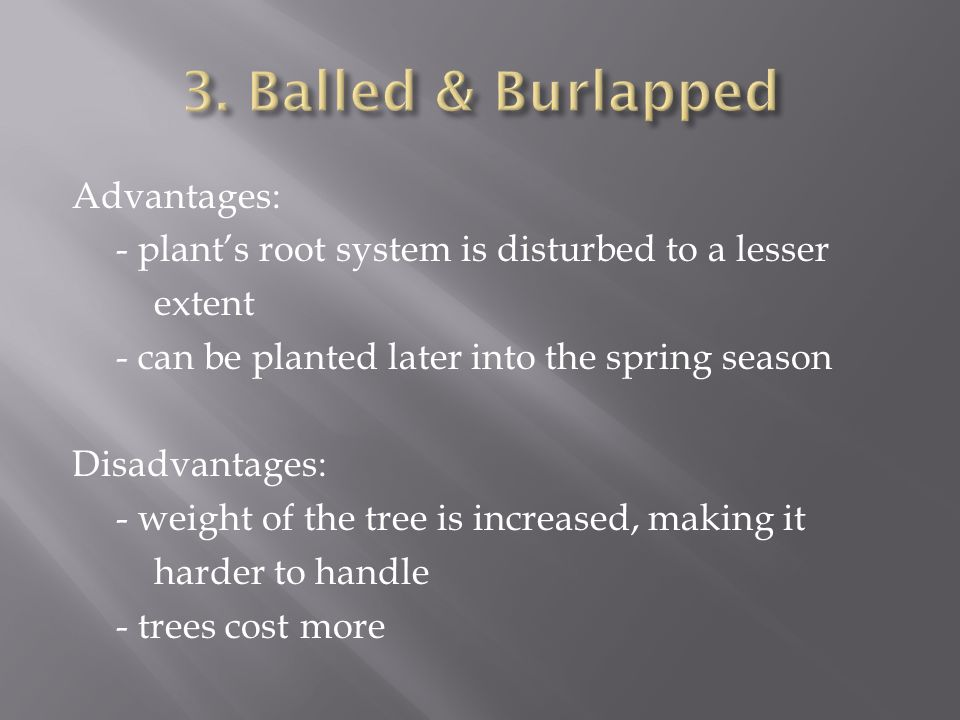 Advantages: - plants root system is disturbed to a lesser extent - can be planted later into the spring season Disadvantages: - weight of the tree is increased, making it harder to handle - trees cost more