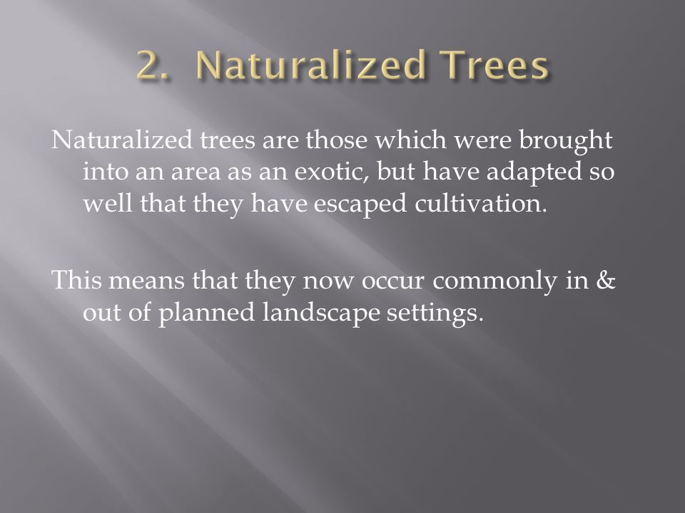 Naturalized trees are those which were brought into an area as an exotic, but have adapted so well that they have escaped cultivation.