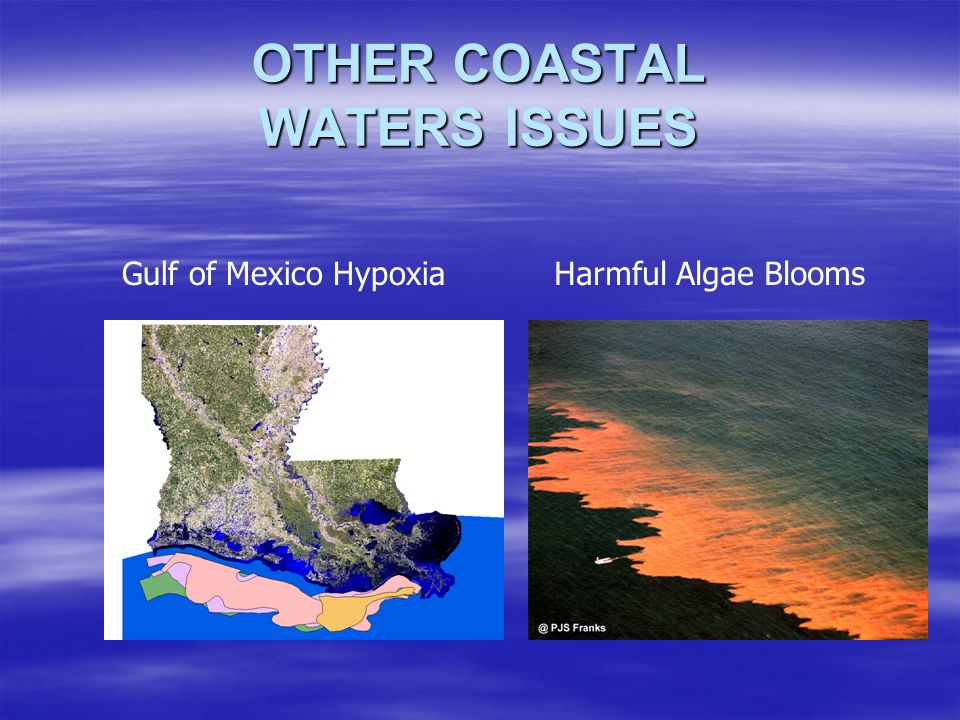 OTHER COASTAL WATERS ISSUES Gulf of Mexico HypoxiaHarmful Algae Blooms