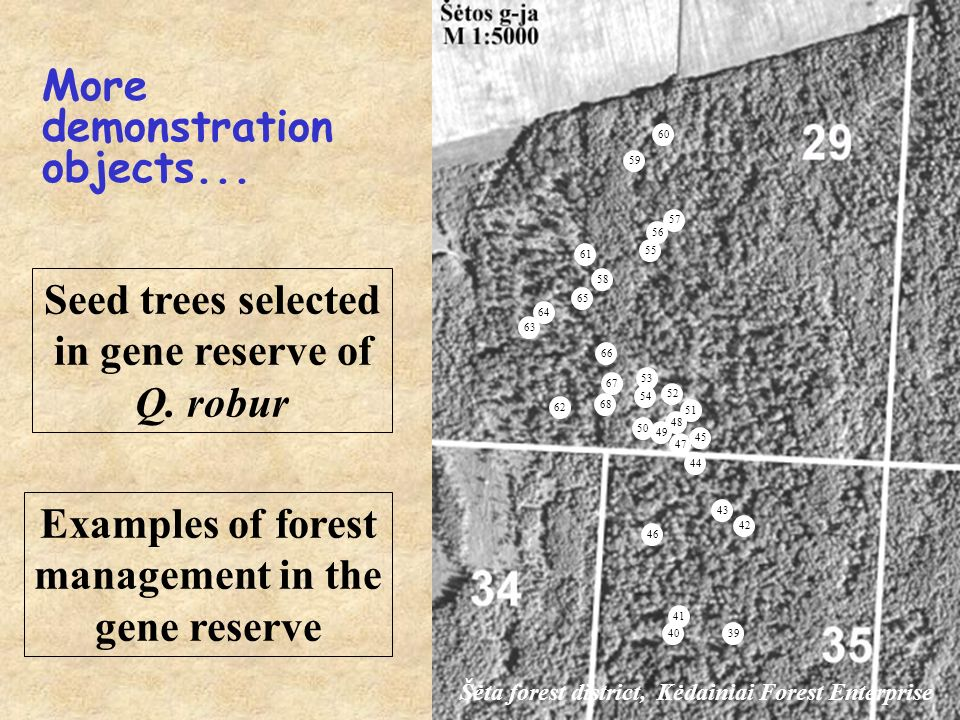 Seed trees selected in gene reserve of Q.