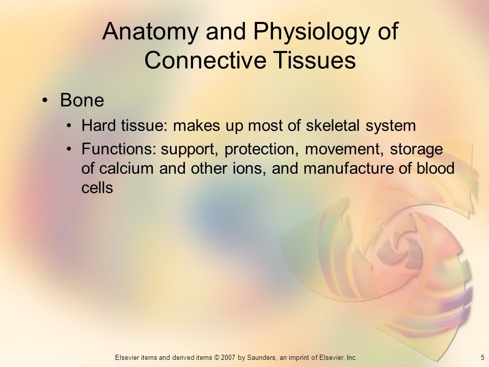 5Elsevier items and derived items © 2007 by Saunders, an imprint of Elsevier, Inc. Anatomy and Physiology of Connective Tissues Bone Hard tissue: make