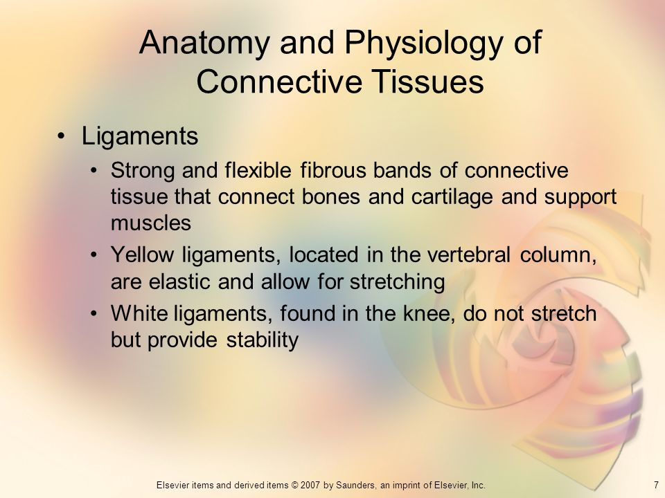7Elsevier items and derived items © 2007 by Saunders, an imprint of Elsevier, Inc. Anatomy and Physiology of Connective Tissues Ligaments Strong and f
