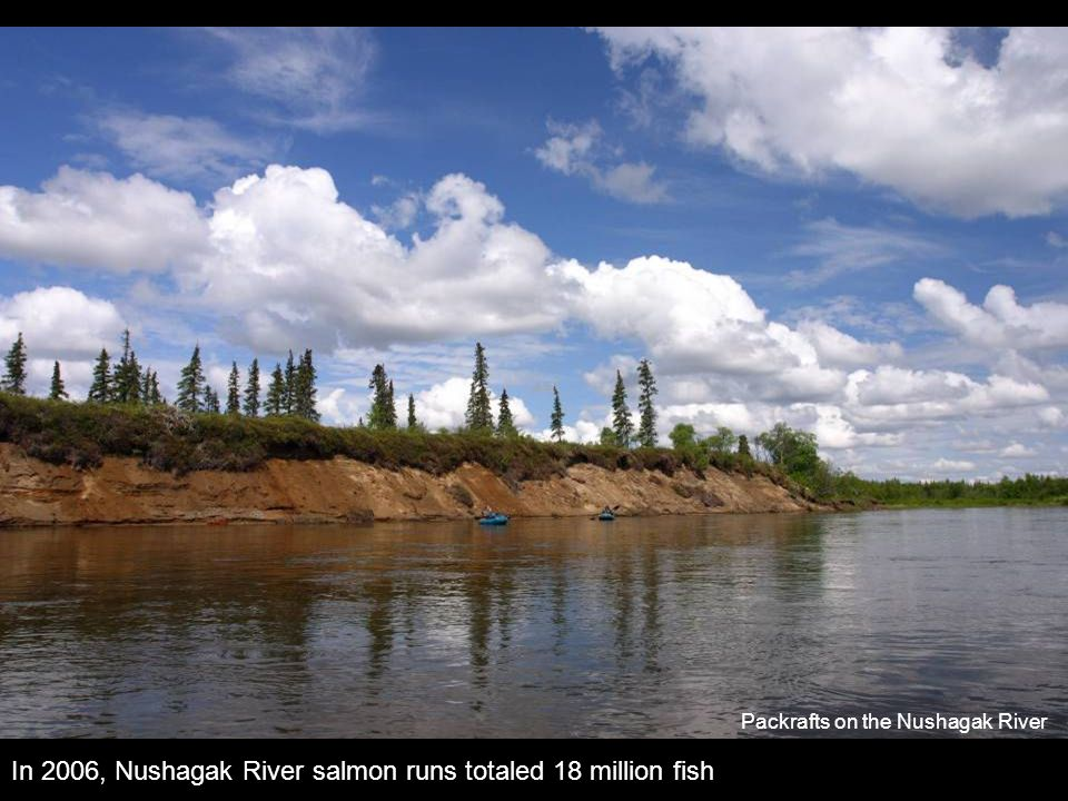 In 2006, Nushagak River salmon runs totaled 18 million fish Packrafts on the Nushagak River