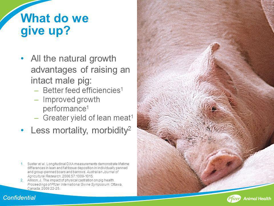 What do we give up? All the natural growth advantages of raising an intact male pig: –Better feed efficiencies 1 –Improved growth performance 1 –Great