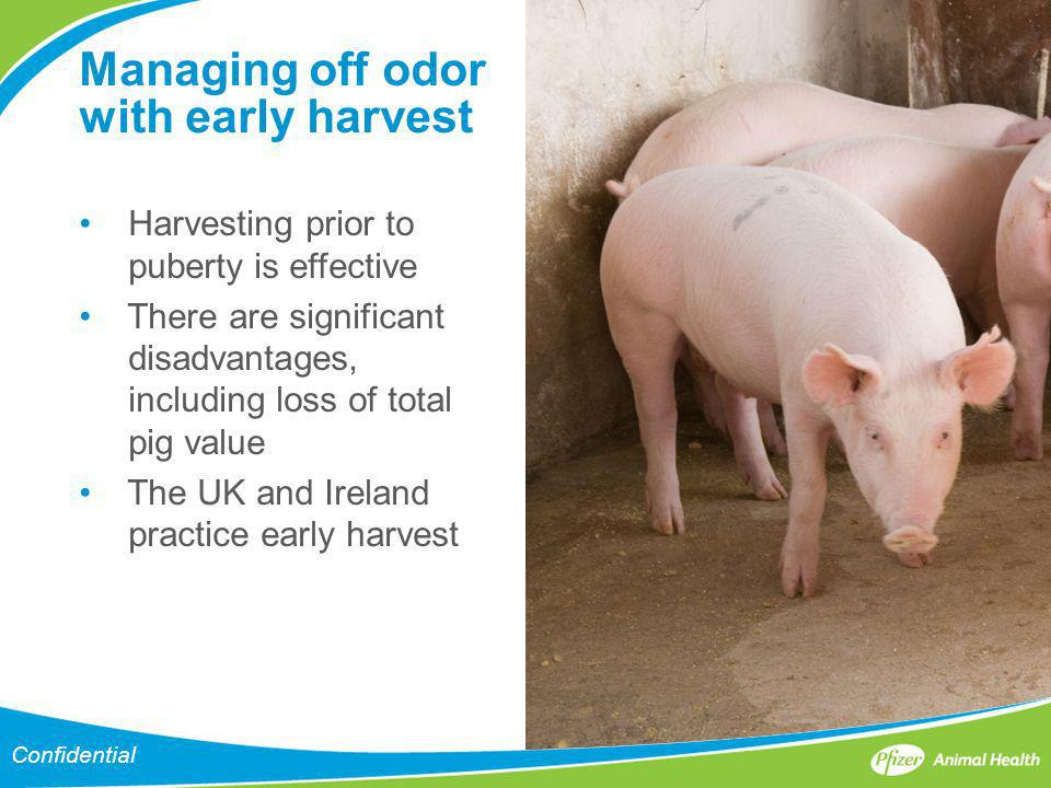 Managing off odor with early harvest Harvesting prior to puberty is effective There are significant disadvantages, including loss of total pig value T