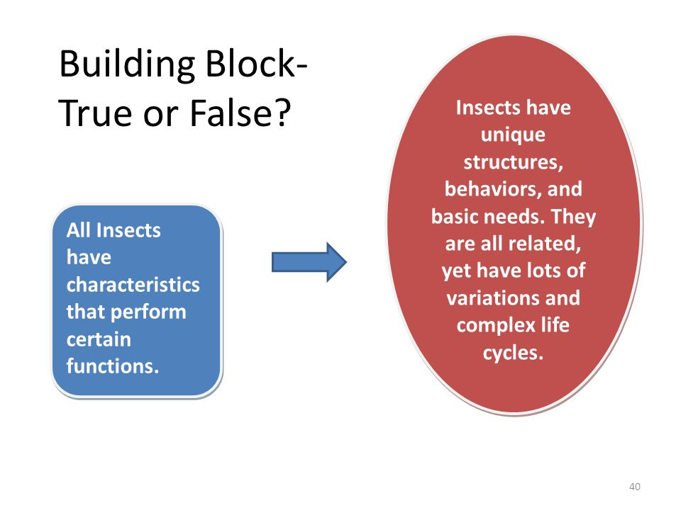 Insects have unique structures, behaviors, and basic needs. They are all related, yet have lots of variations and complex life cycles. All Insects hav