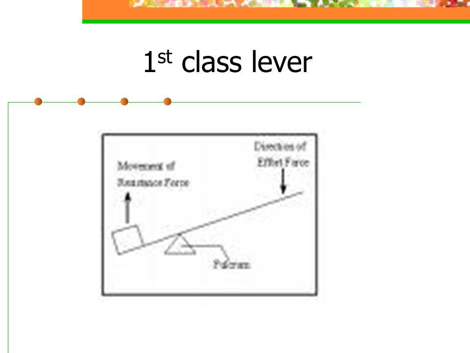 1 st class lever