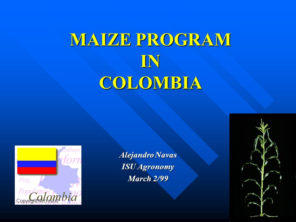 MAIZE PROGRAM IN COLOMBIA Alejandro Navas ISU Agronomy March 2/99