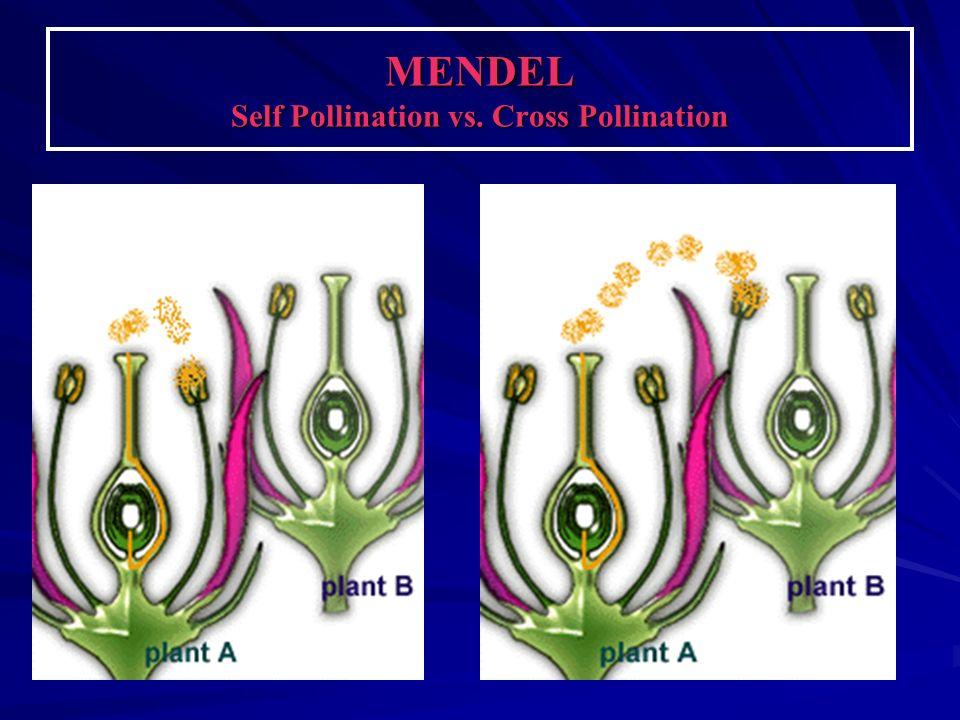 PURE PLANTS P = Parent generation F1 generation.