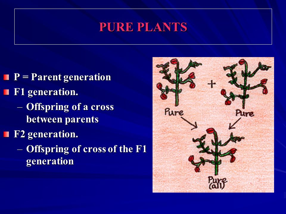 PURE PLANTS P = Parent generation F1 generation.